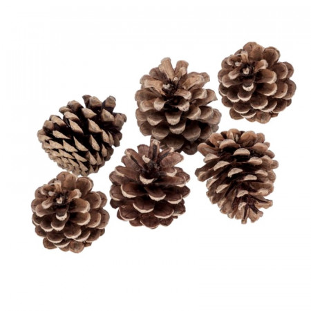 Lot of 6 large real pine cones, height approx. 7 cm, for natural decoration